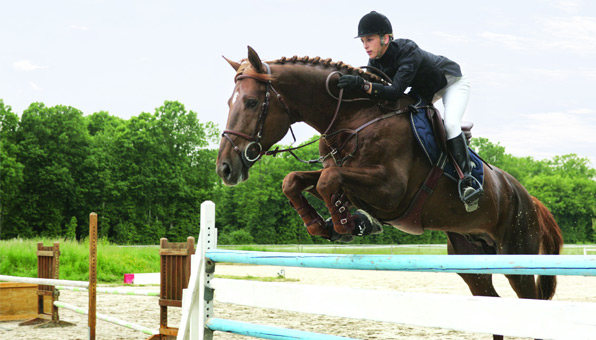 POLAR-Equine